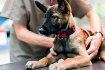 Veterinary Services In Baja